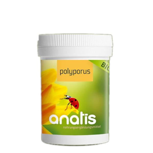 Anatis Pilz Polyporus ganzheitliche gesundheit