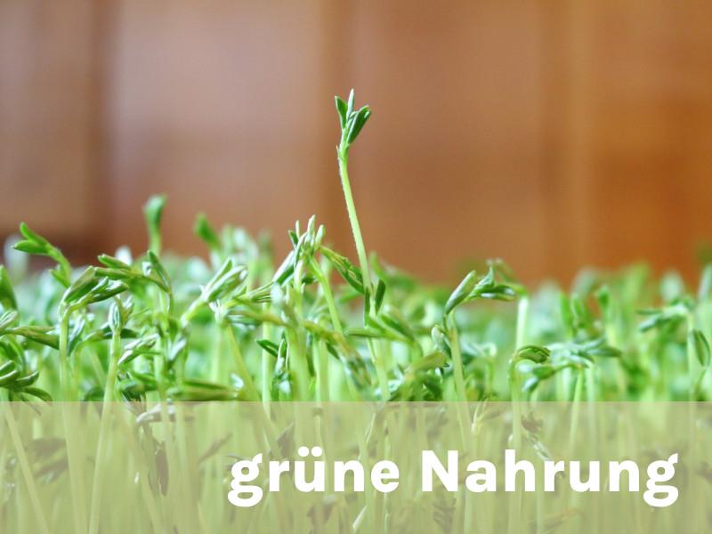 Sprossen grün Nahrung Andreas Resch